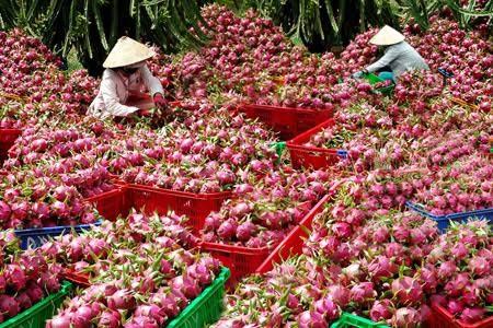 6 loai hoa qua Viet Nam khong bao gio phai nhap khau-Hinh-3