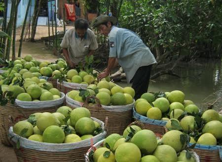6 loai hoa qua Viet Nam khong bao gio phai nhap khau-Hinh-4