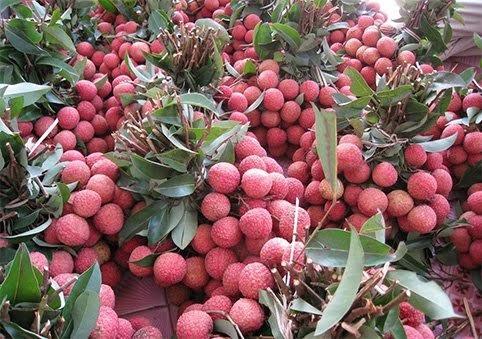 6 loai hoa qua Viet Nam khong bao gio phai nhap khau-Hinh-5
