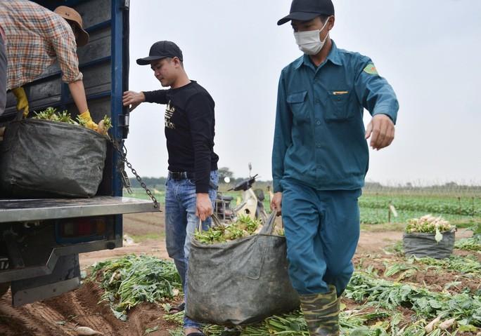 Nguoi dan Ha Noi nho bo hang tram tan cu cai vi khong ban duoc-Hinh-10