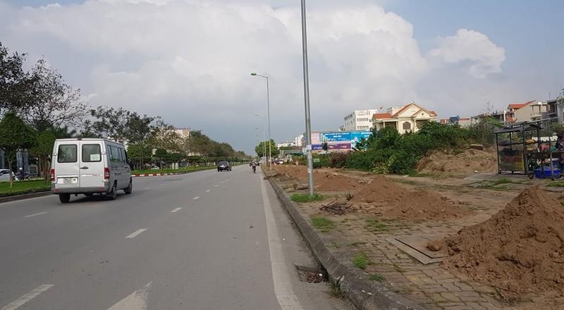 Thay the hon 700 cay xanh: Thanh pho Hai Duong lam thieu quy trinh?-Hinh-3