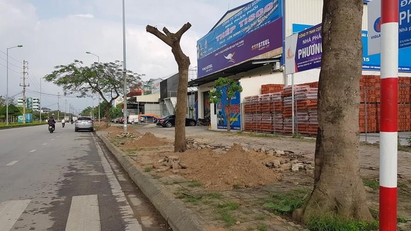 Thay the hon 700 cay xanh: Thanh pho Hai Duong lam thieu quy trinh?