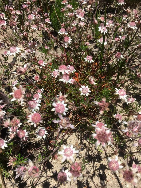 Ky la loai hoa tuyet dep no ro sau nhung tran chay rung o Australia-Hinh-11