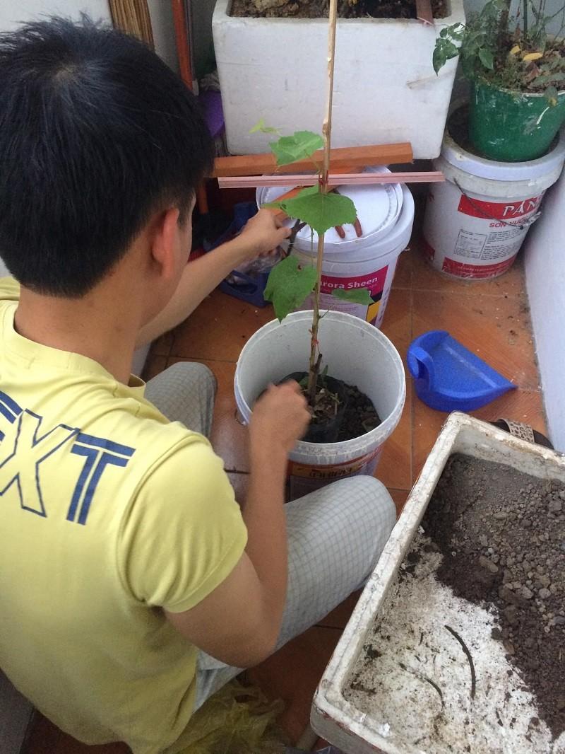 Ong chong 'dam nhat Vinh Bac Bo'-Hinh-11