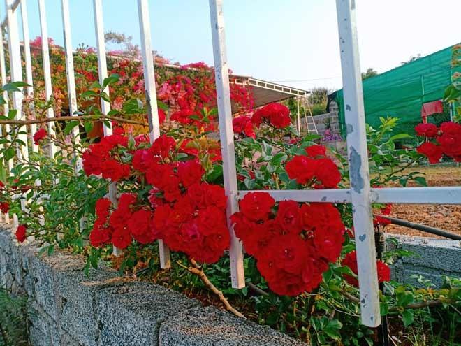 Chang trai Dak Lak bo viec ve trong hoa cho vo ngam-Hinh-5