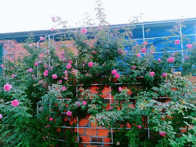 Chang trai Dak Lak bo viec ve trong hoa cho vo ngam-Hinh-6