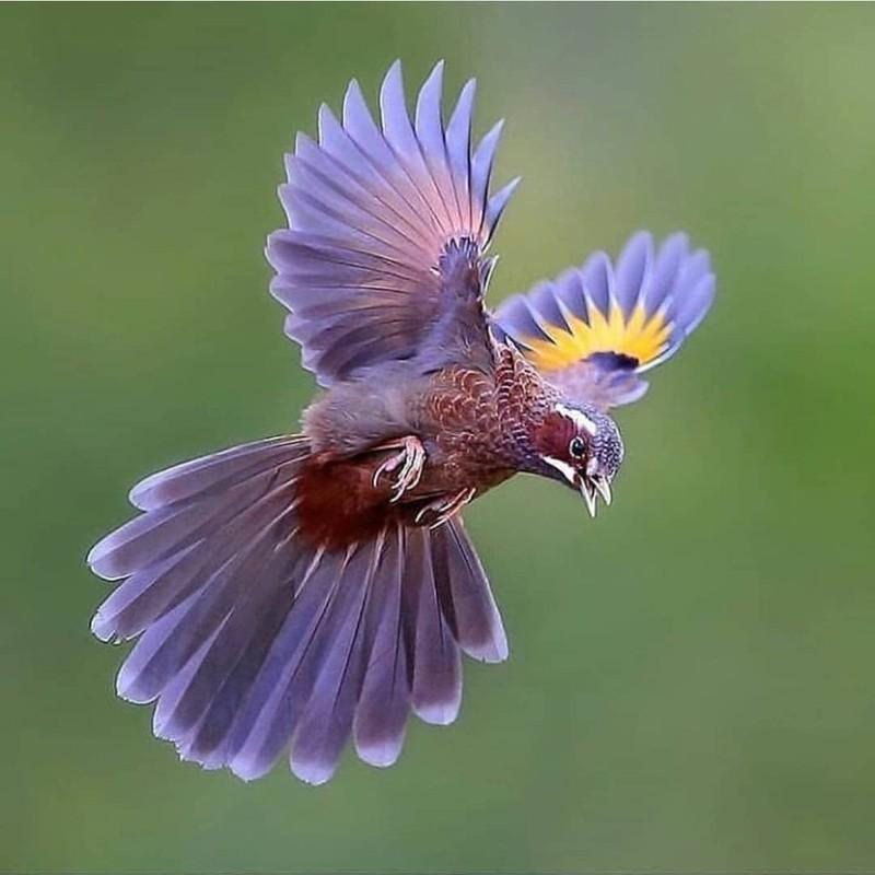 Nhung bang chung cho thay to tien loai chim ngu tri Trai dat-Hinh-6