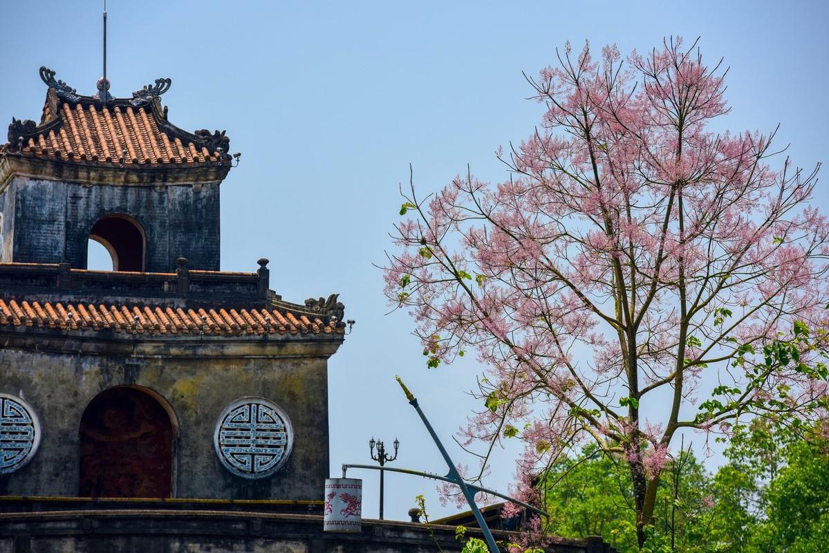 Loai vuong gia chi hoa va di san noi tieng trong Hoang cung Hue