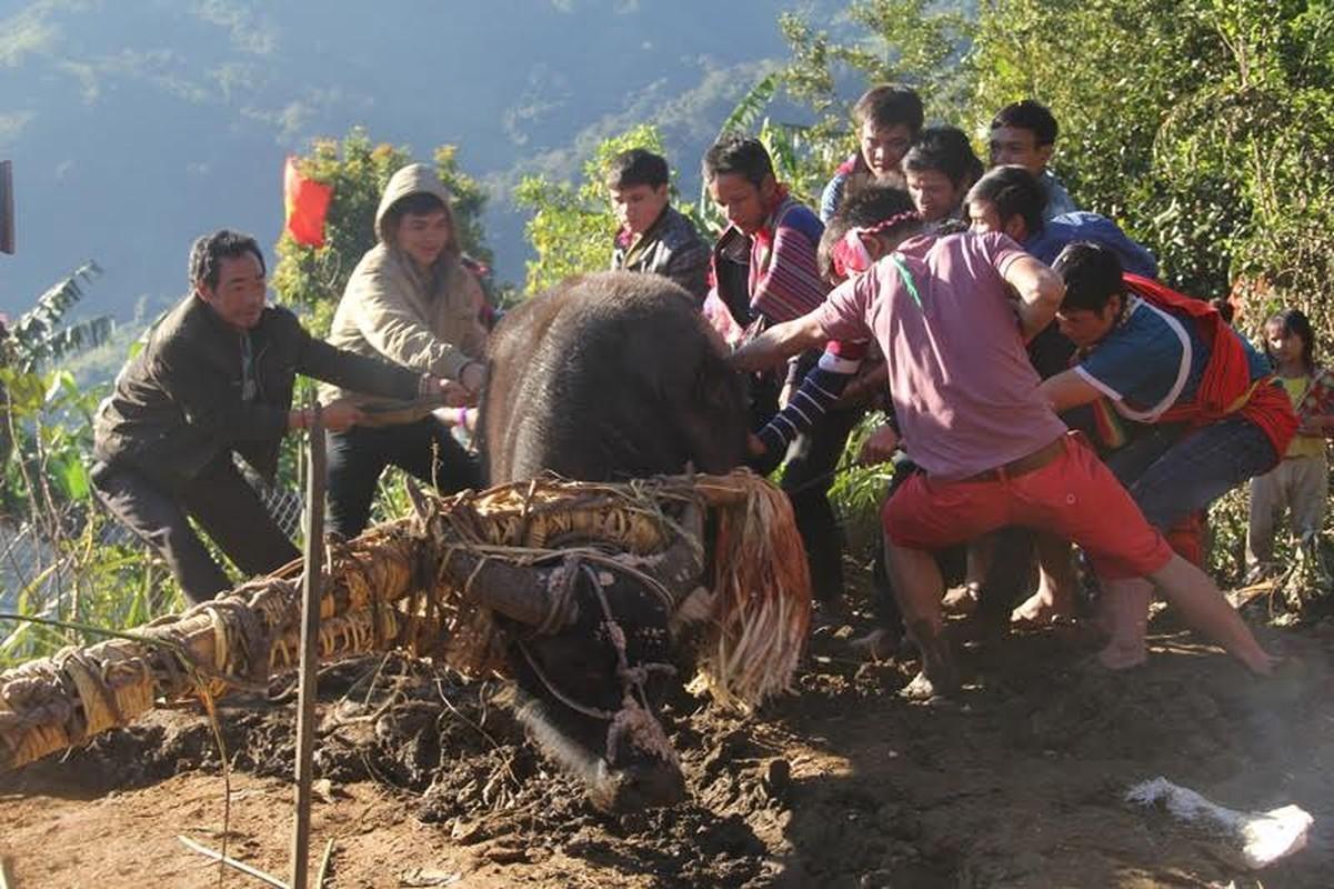 Anh: Dieu dac biet trong le dam trau o Quang Nam-Hinh-3