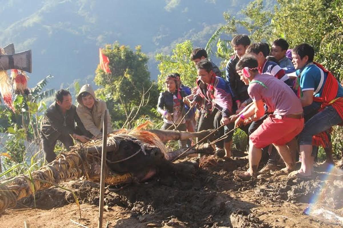 Anh: Dieu dac biet trong le dam trau o Quang Nam-Hinh-4