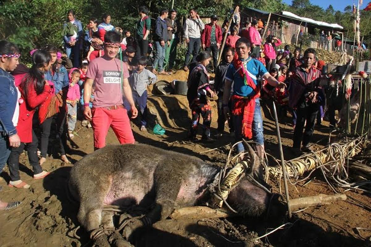 Anh: Dieu dac biet trong le dam trau o Quang Nam-Hinh-5