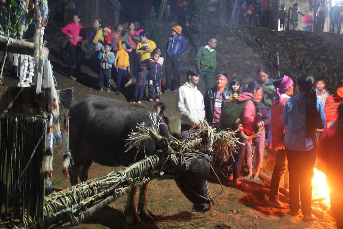 Anh: Dieu dac biet trong le dam trau o Quang Nam-Hinh-6