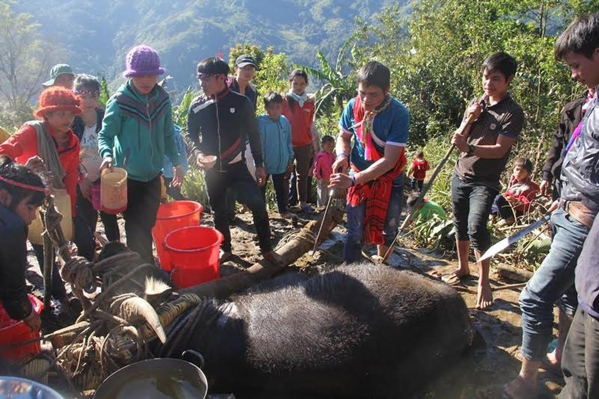 Anh: Dieu dac biet trong le dam trau o Quang Nam-Hinh-9
