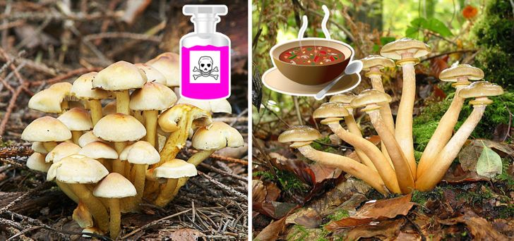 Diem danh 10 loai thuc pham chua doc to co the lam hai ban-Hinh-6