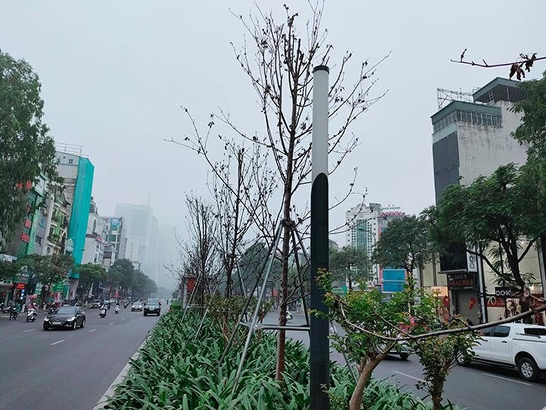 HN thay the toan bo cay phong la do o duong Nguyen Chi Thanh - Tran Duy Hung-Hinh-3