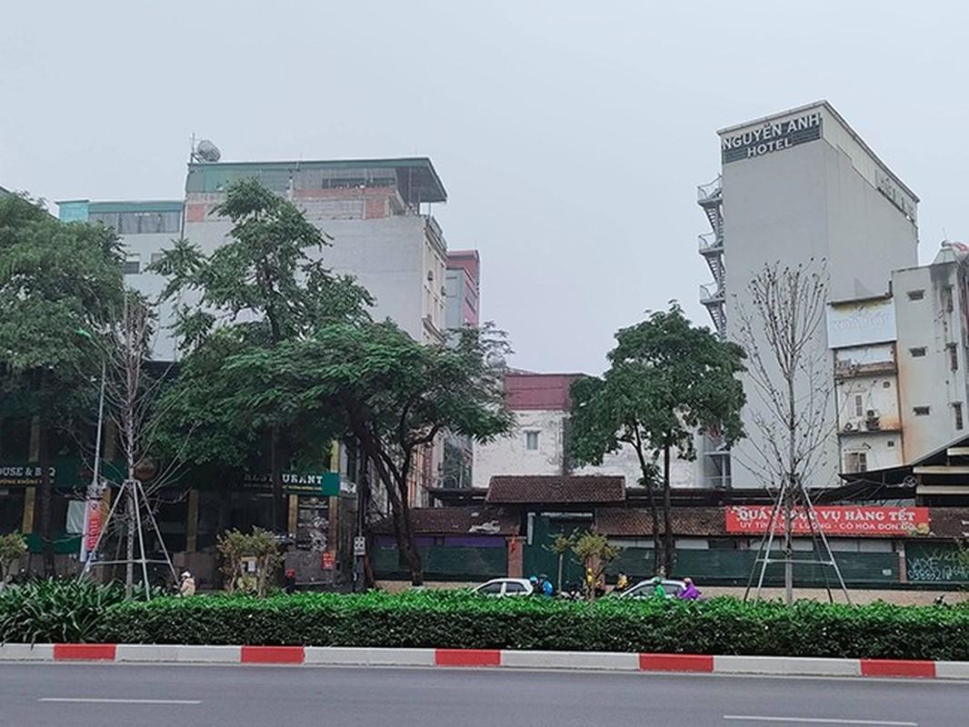 HN thay the toan bo cay phong la do o duong Nguyen Chi Thanh - Tran Duy Hung-Hinh-4