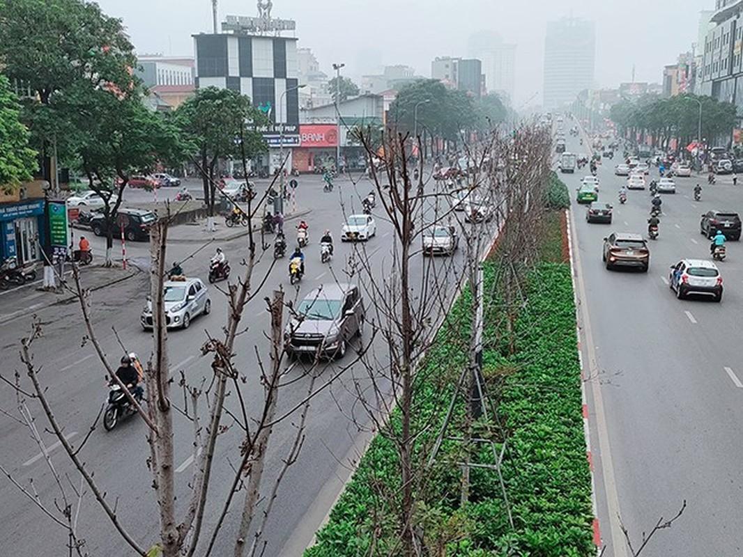 HN thay the toan bo cay phong la do o duong Nguyen Chi Thanh - Tran Duy Hung-Hinh-6