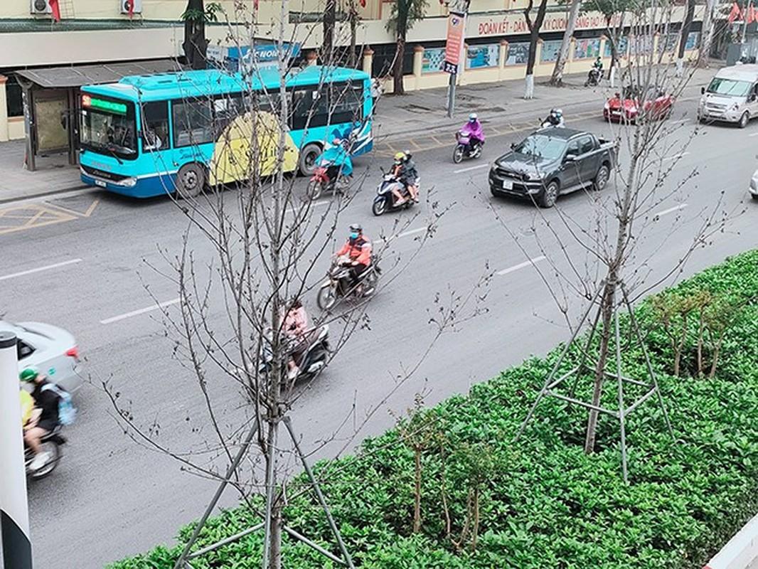 HN thay the toan bo cay phong la do o duong Nguyen Chi Thanh - Tran Duy Hung-Hinh-7