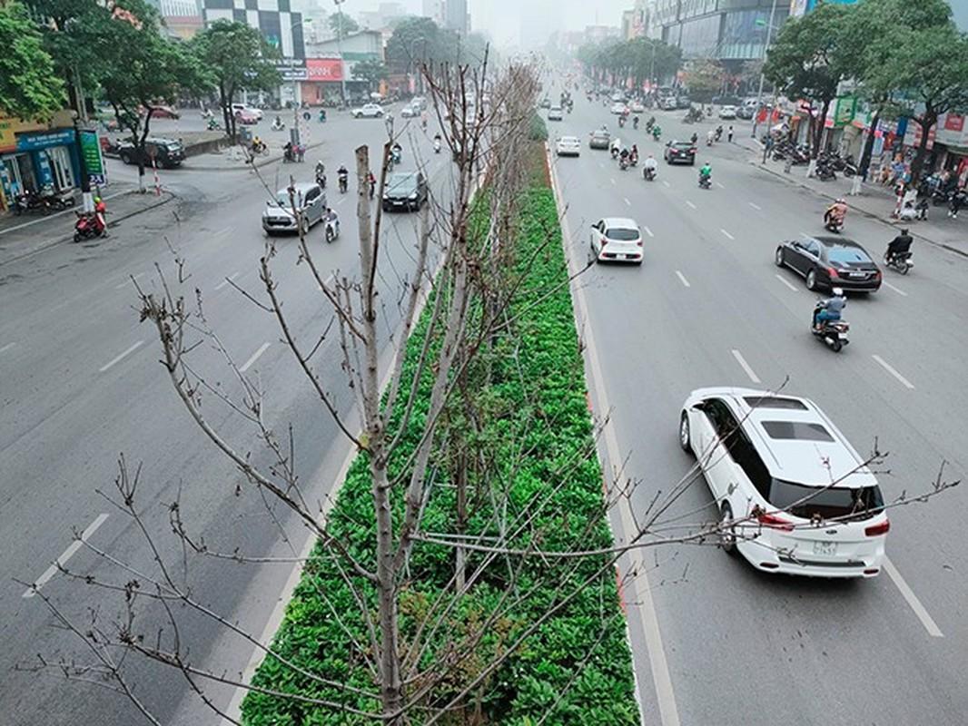 HN thay the toan bo cay phong la do o duong Nguyen Chi Thanh - Tran Duy Hung-Hinh-8