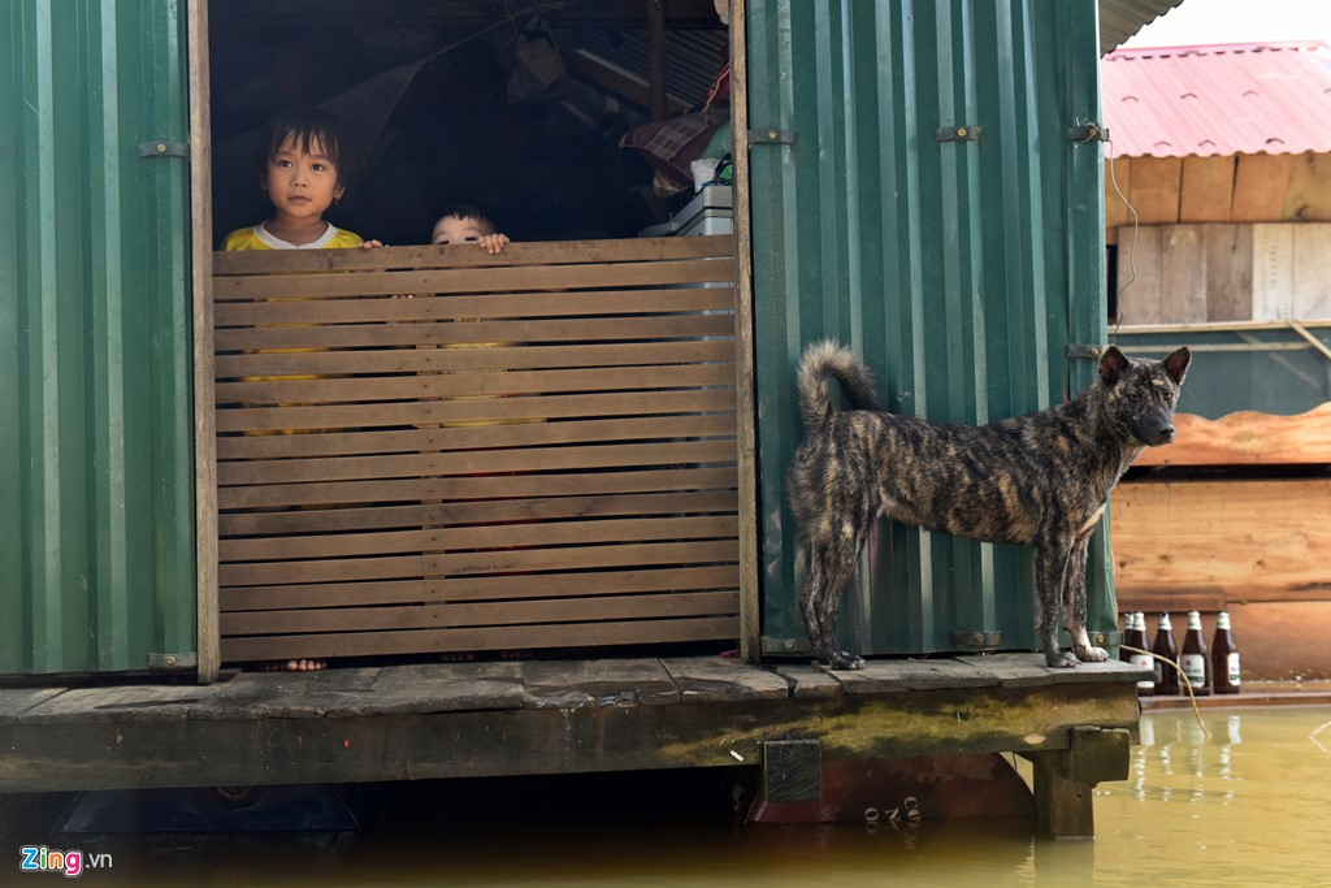 Chum anh cuoc song..tren mai nha o ron lu Quang Binh-Hinh-7