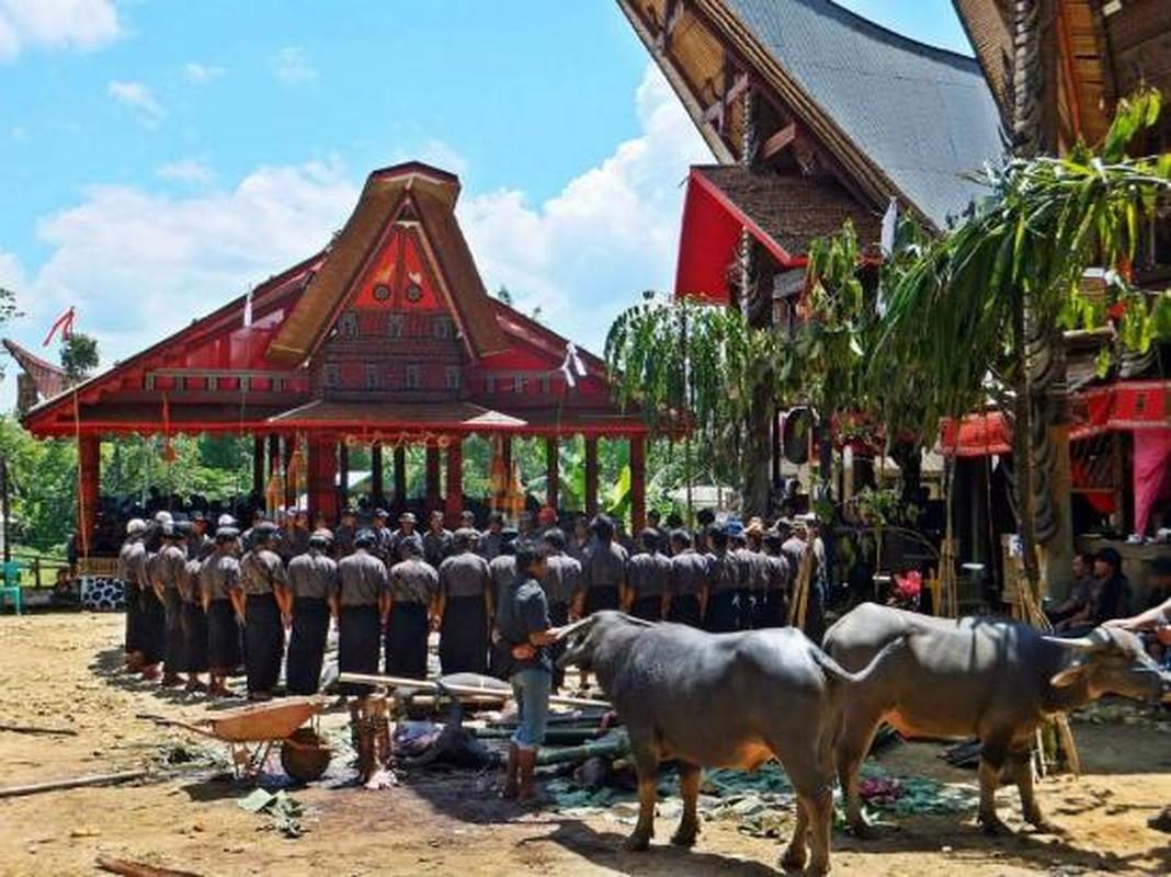 "Ron nguoi tap tuc ""song"" cung nguoi chet cua bo toc o Malaysia-Hinh-8"