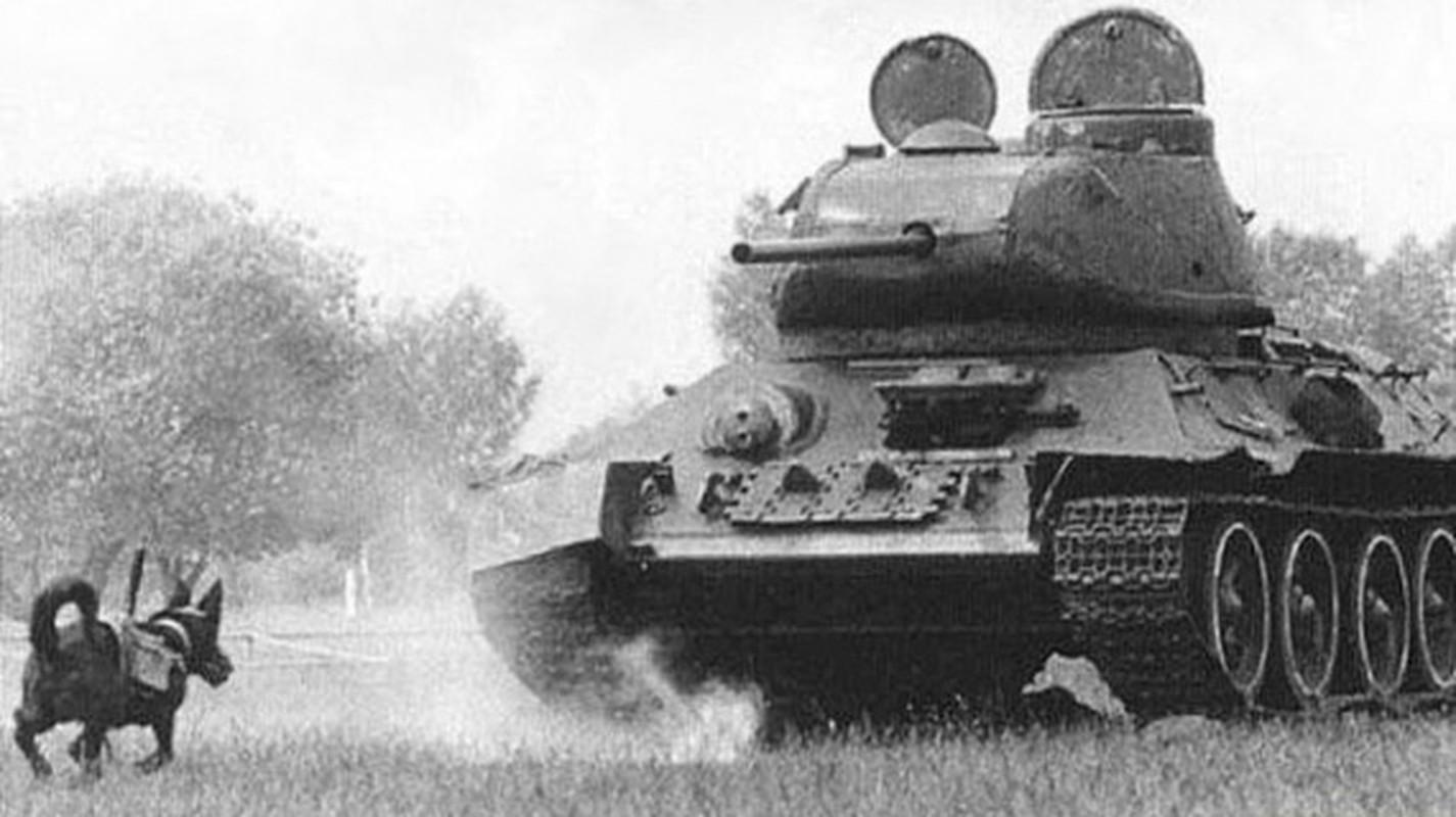 Quan doi cua Hitler thua dau trong tran chien Stalingrad ac liet-Hinh-2