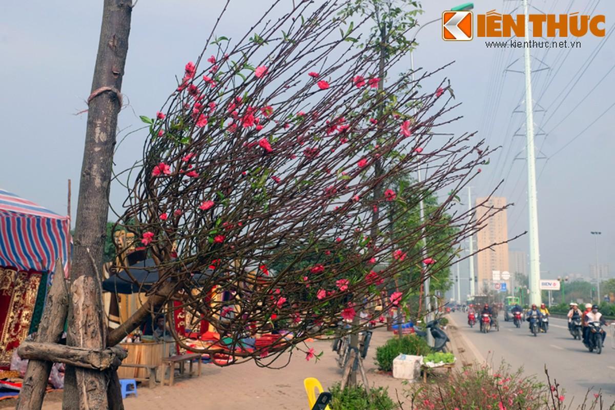 Anh: Tet ve tren nhung xe cho dao rong tren pho Ha Noi-Hinh-13