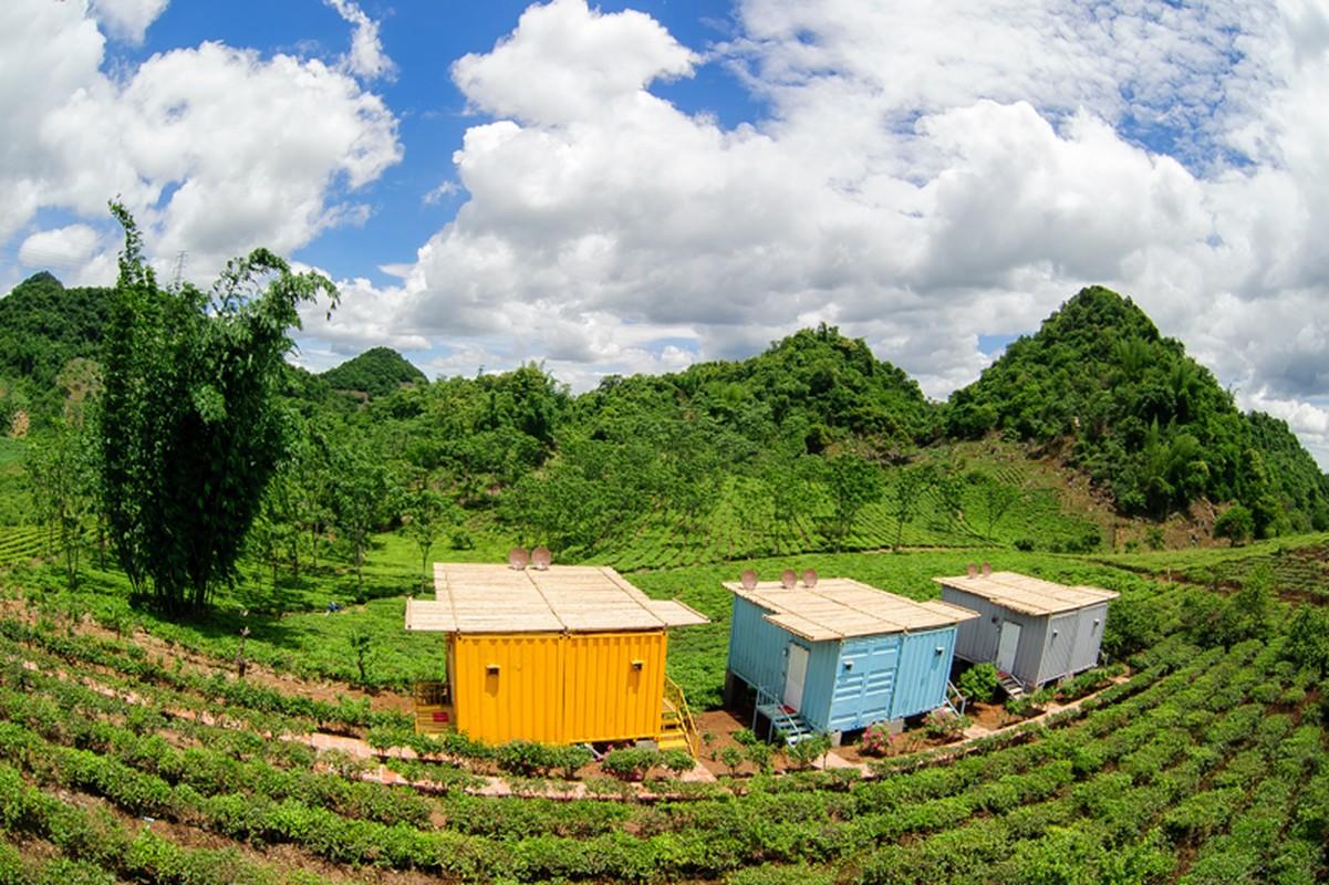 Du xuan cao nguyen Moc Chau: Ngu container, ngam hoa rung-Hinh-4