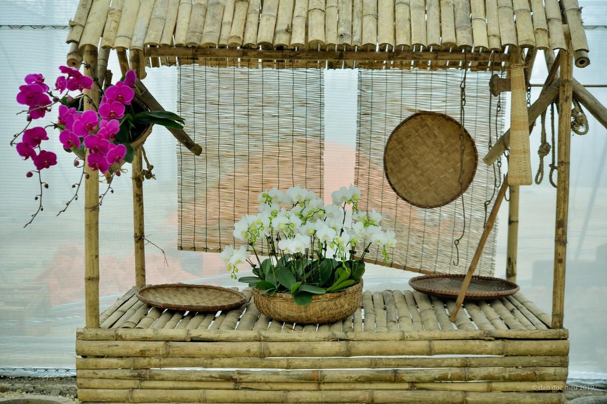 Du xuan dau nam: Vuon hoa 15 hecta khoe sac o Ninh Binh-Hinh-10