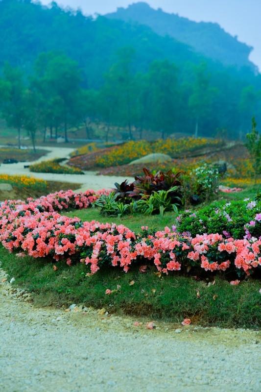 Du xuan dau nam: Vuon hoa 15 hecta khoe sac o Ninh Binh-Hinh-3