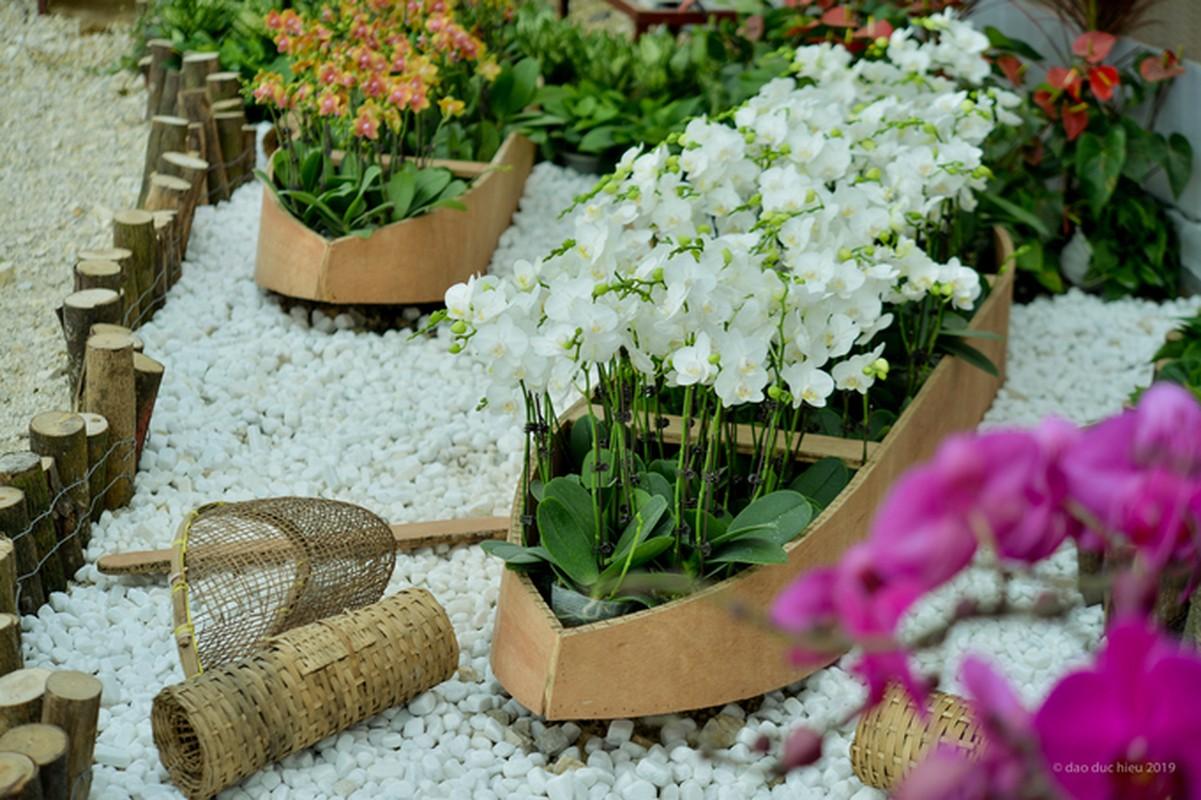 Du xuan dau nam: Vuon hoa 15 hecta khoe sac o Ninh Binh-Hinh-4