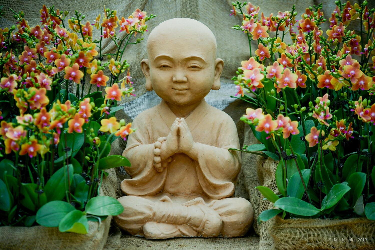Du xuan dau nam: Vuon hoa 15 hecta khoe sac o Ninh Binh-Hinh-9