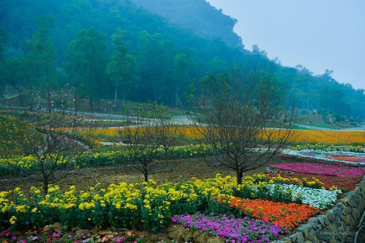 Du xuan dau nam: Vuon hoa 15 hecta khoe sac o Ninh Binh