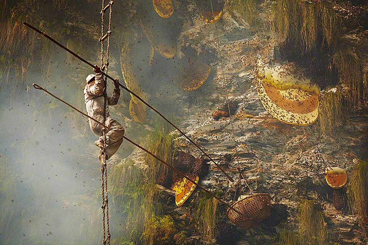 Canh kinh hoang ve thu hoach loai mat ong dat hon vang-Hinh-4