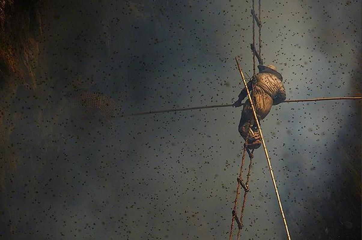 Canh kinh hoang ve thu hoach loai mat ong dat hon vang-Hinh-8