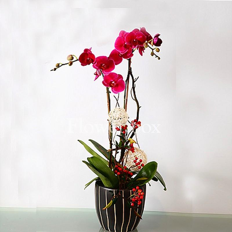 Goi y nhung loai hoa doc la, gia mem chung Tet sang nha-Hinh-2