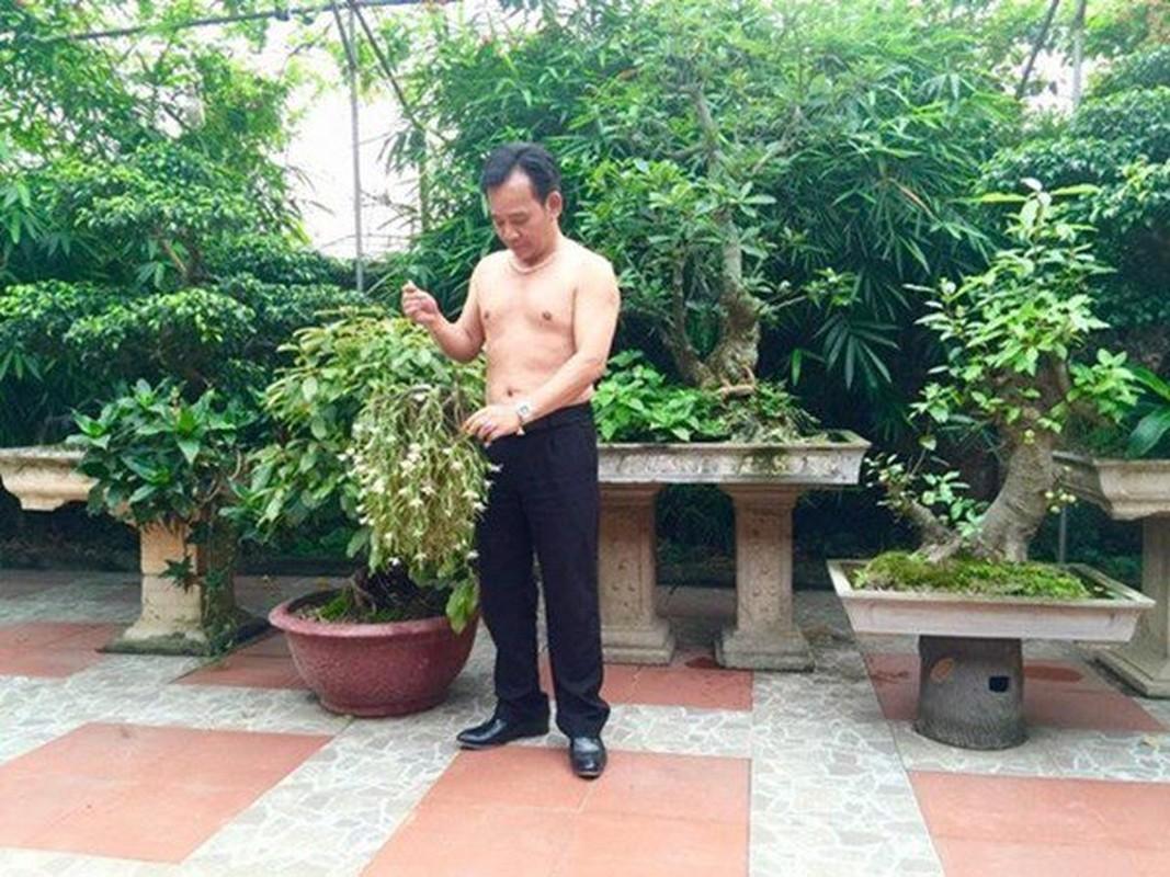 Nha vuon hon 1.000 m2 trong cay, nuoi ga cua nghe si Quang Teo-Hinh-3