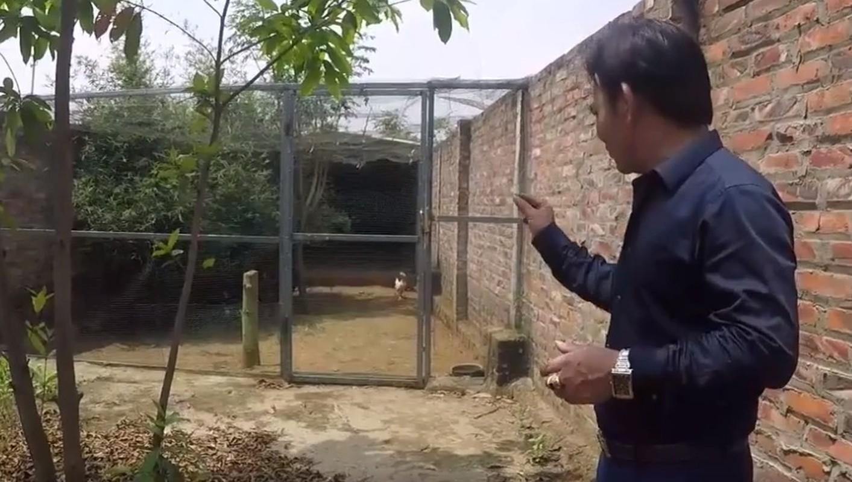 Nha vuon hon 1.000 m2 trong cay, nuoi ga cua nghe si Quang Teo-Hinh-9