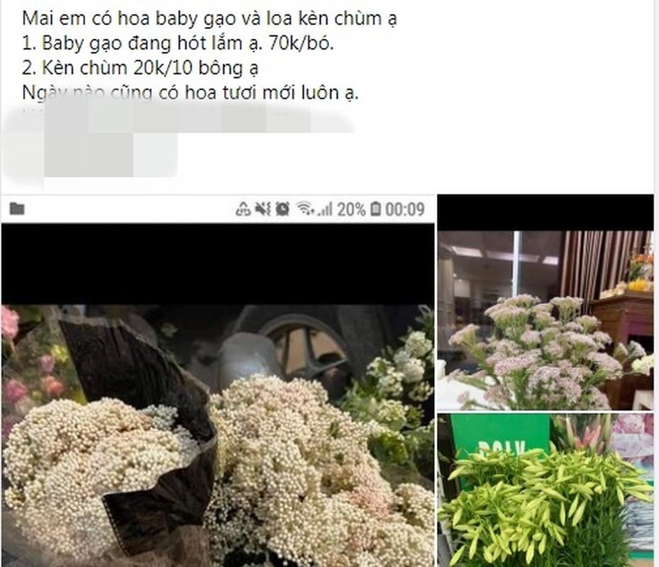 Ngoi nha dang hinh chot 20 don hoa baby gao... doanh thu bac trieu/ngay