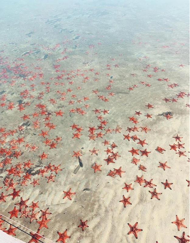 Bắt sao biển sống ảo, nhiều bạn trẻ nhận đủ chỉ trích từ netizen