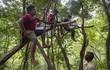 Ảnh: Học sinh ngôi làng xa xôi học trực tuyến...trên cây thời COVID-19