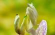 Chiêm ngưỡng các loài côn trùng độc, lạ nhất thế giới