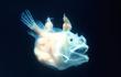 Vẻ đẹp kỳ ảo của những loài tự phát sáng, nhìn thật khó tin