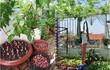 Ở nhà giãn cách, netizen khoe vườn rau mini cải thiện bữa ăn