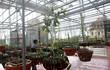 Choáng ngợp vườn lan đột biến giá bạc tỷ giữa Hà thành