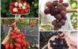 Vườn trái cây trĩu quả trên sân thượng 50m2 của mẹ 8X ở Thái Bình