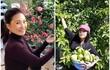 Đọ cơ ngơi đồ sộ của 2 nữ danh hài Việt nổi danh hải ngoại