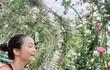 Vườn hồng hoành tráng như rạp đám cưới của Ốc Thanh Vân