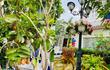 Mãn nhãn khu vườn đầy hoa trái trong biệt thự của Vy Oanh