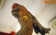 """Giải mã hình tượng """"vợ chồng"""" vẹt khổng lồ 500 tuổi ở Hà Nội"""